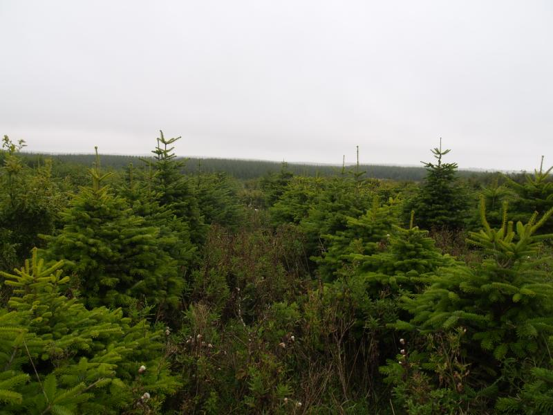 Land Commercial for sale in Christmas Tree & Mixed Species Wood, South Teuchan, Cruden Bay, Aberdeenshire, AB42