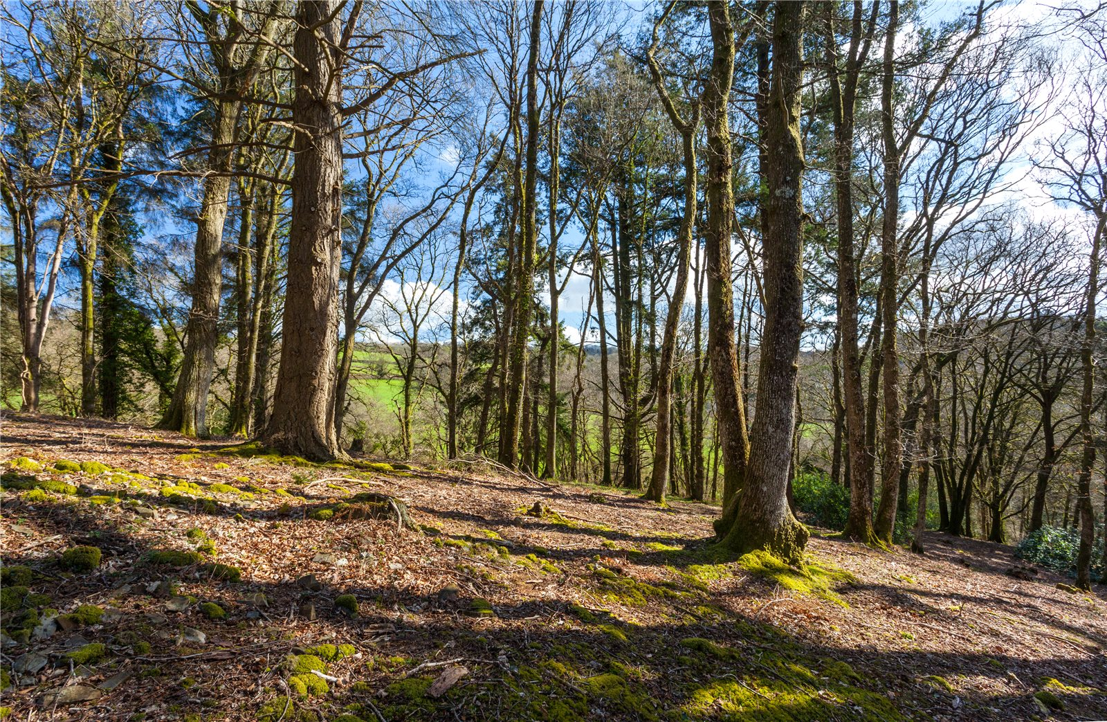 Additional photo for property listing at Wonham, Bampton, Tiverton, Devon, EX16 Tiverton, Angleterre
